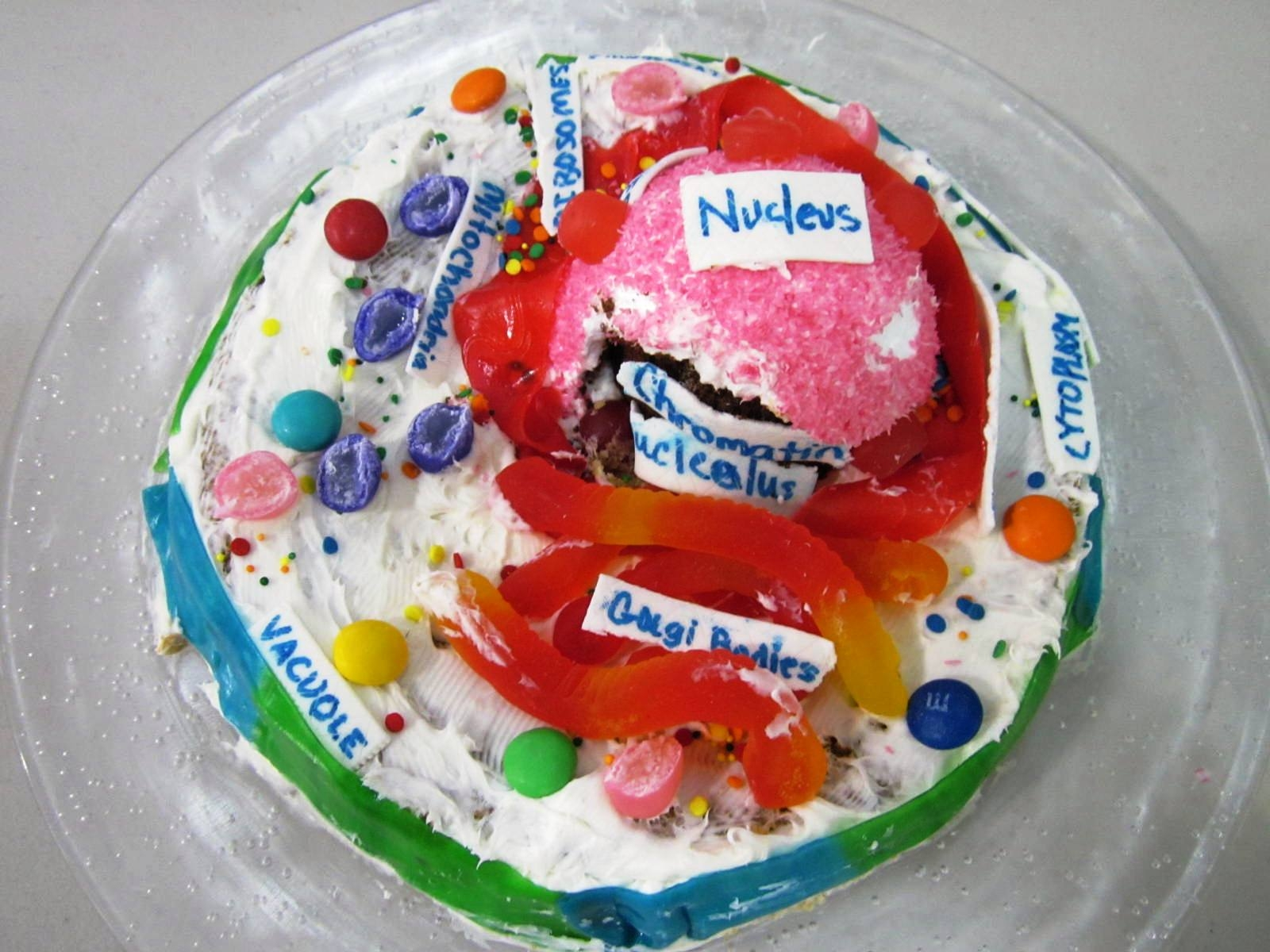 Plant Cell Project with Jello http://scienceandtechnologylady.blogspot.com/2012/01/edible-science-model-projects-part-2.html