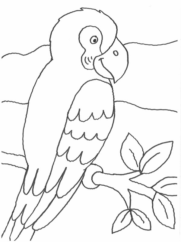 malvorlagen gratis malvorlagen papagei