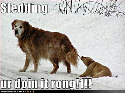 Funny DOG Pictures