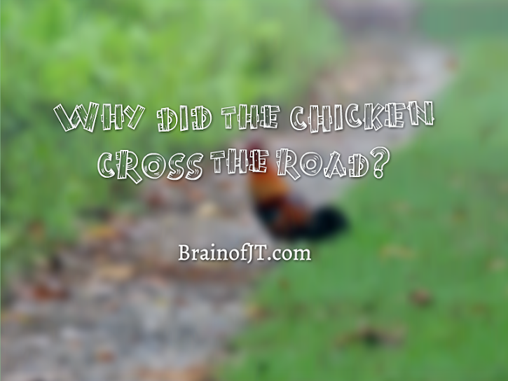 We finally learn the truth behind the chicken crossing the road.