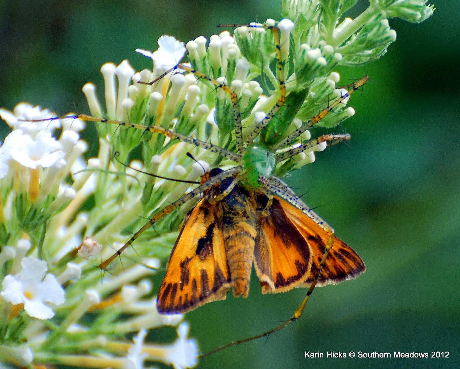 Southern Meadows: Beyond Butterflies