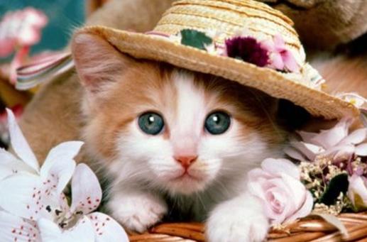 Tau Gak Sih Kenapa Kucing Dipanggil Pus Musti Menoleh