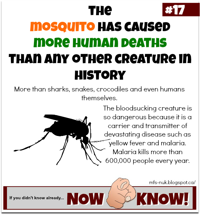 Mfs now u know random fact 17 mosquitoes kill more for Mosquito fish facts