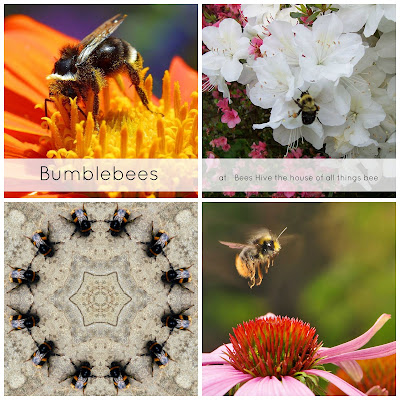 about bumblebees