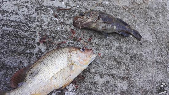 Seronok Memancing di Rockbund Fishing Chalet