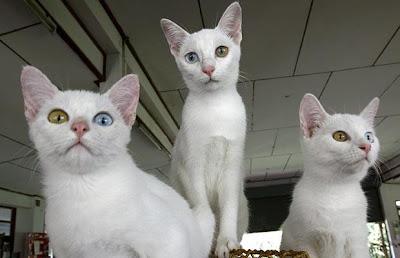 kucing manis ini ternyata adalah monster mematikan