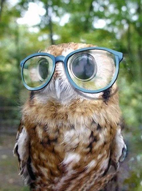 !! Madre mia !! Owl