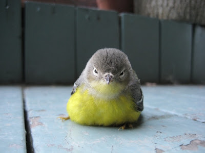 cute little bird