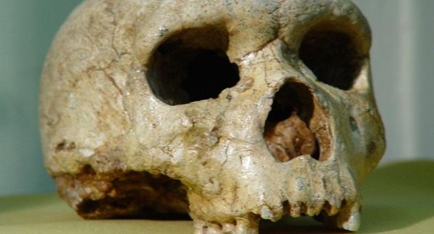 Ο σκελετός Homo Sapiens που βρέθηκε σε σπήλαιο των Χανίων και τον άρπαξαν οι Ιταλοί