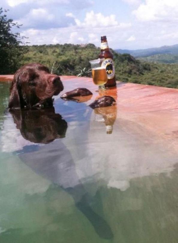 Ein Bildband mit sabbernden Hunde Babys Die Welt