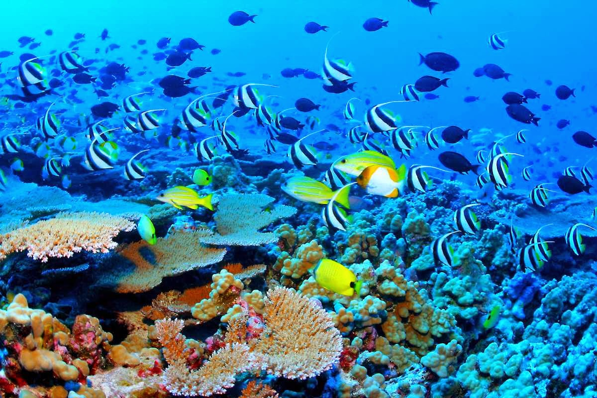 Maldives wins 2nd place in the DIVER magazine destination of the year award
