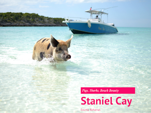 SCDC Travels: Staniel Cay