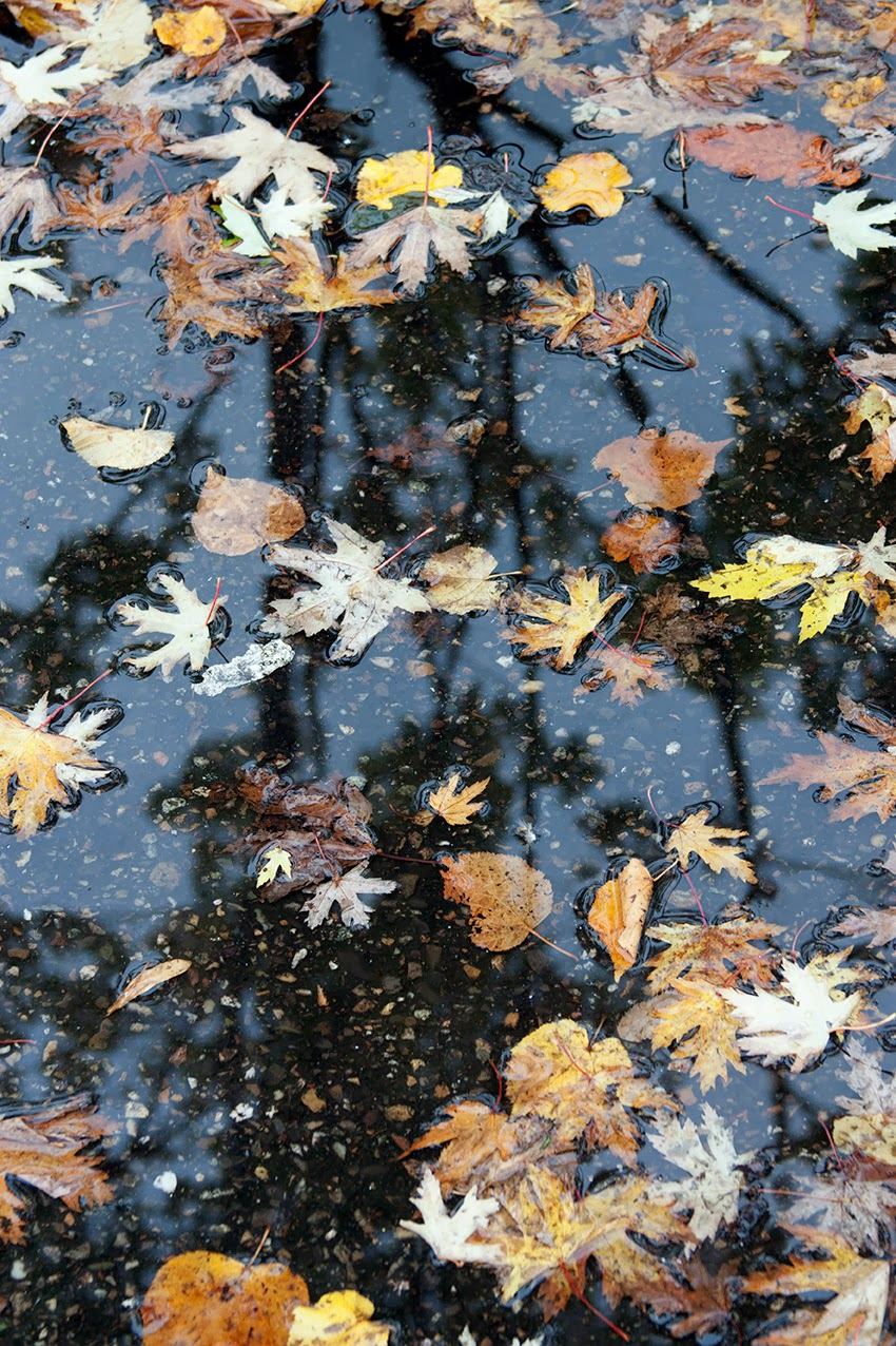 Reflectie en blaadjes in grote plas