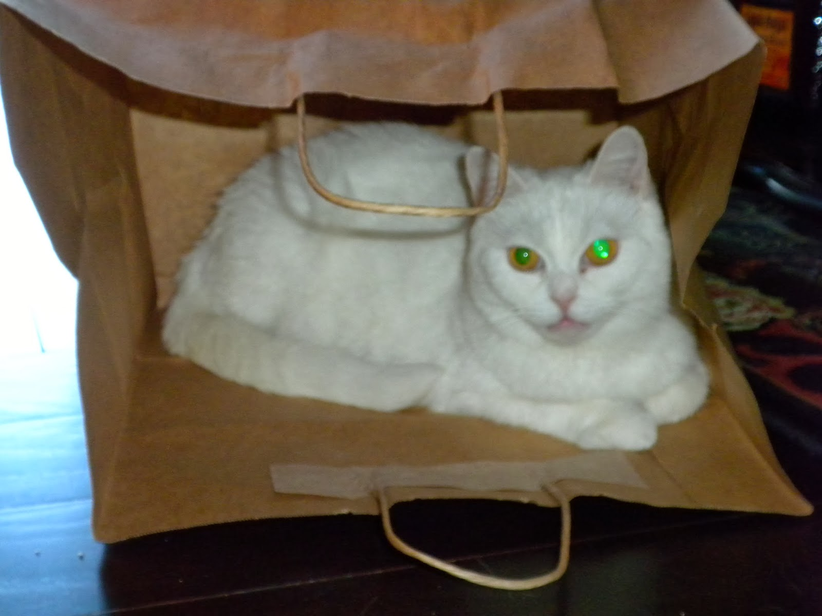 Lilly in a Paper Bag - Substance of Living