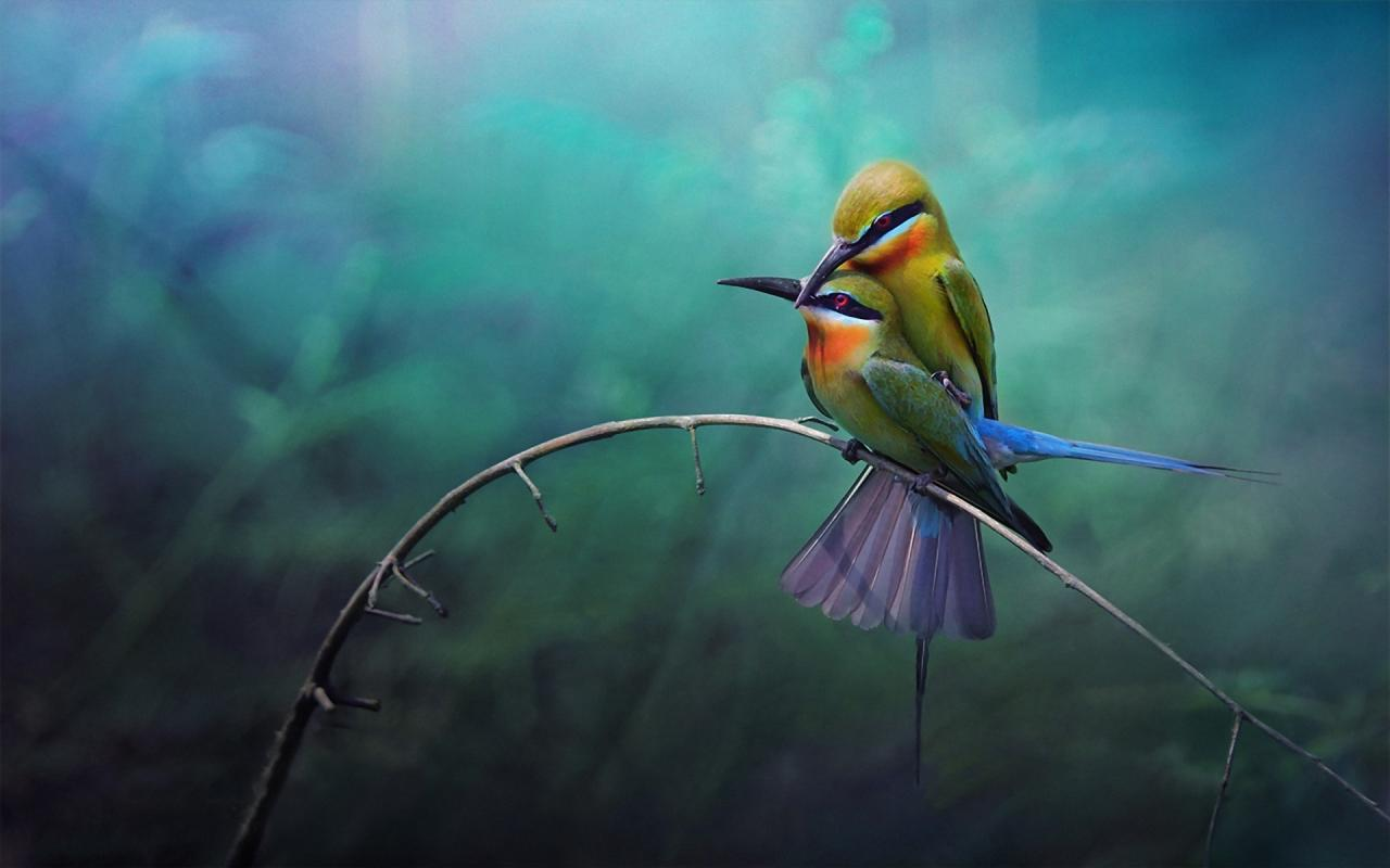Birds Love Dream Wallpapers