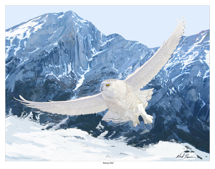 Wild Animals: SNOWY OWL (Bubo scandiacus)