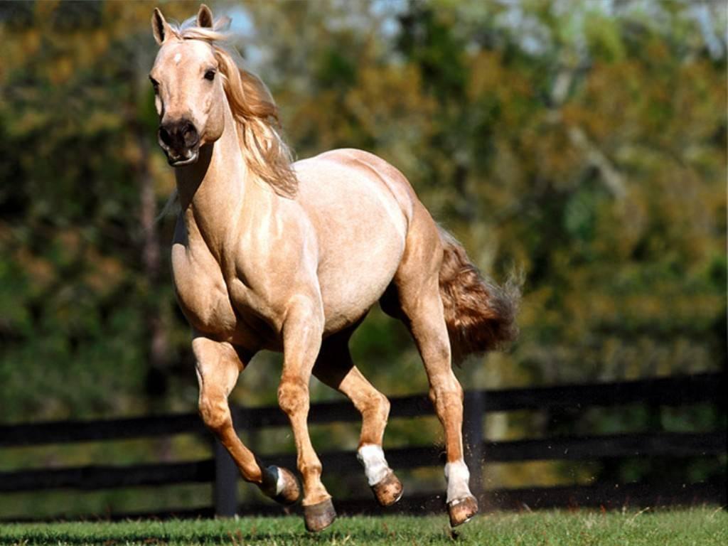... : horse computer wallpaper , horse screensavers , horses wallpaper