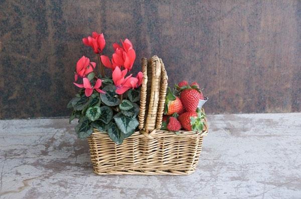 cesta picnic sally hambleton