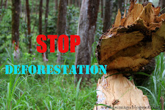 Stop Deforestation!!
