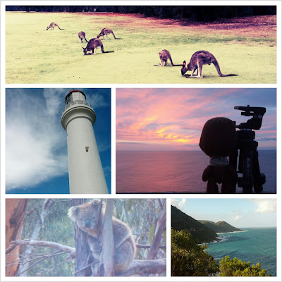 Viaje a Australia. Día 3: Avistando koalas y canguros salvajes