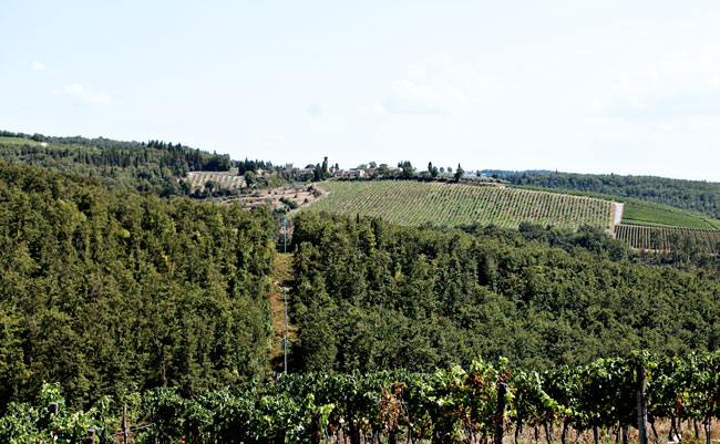 La Canonica Di Cortine, Vineyard, Tuscany, Photography, Italy,