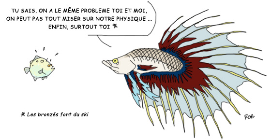 Le blog du poisson combattant for Aquarium poisson rouge dessin