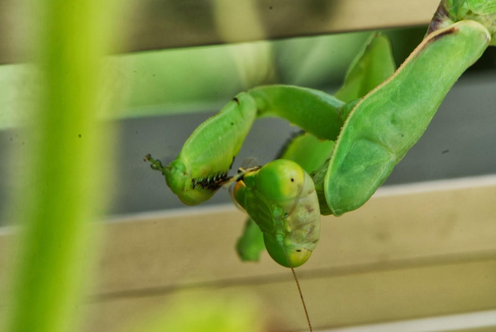 ジョロウグモの画像 p1_29