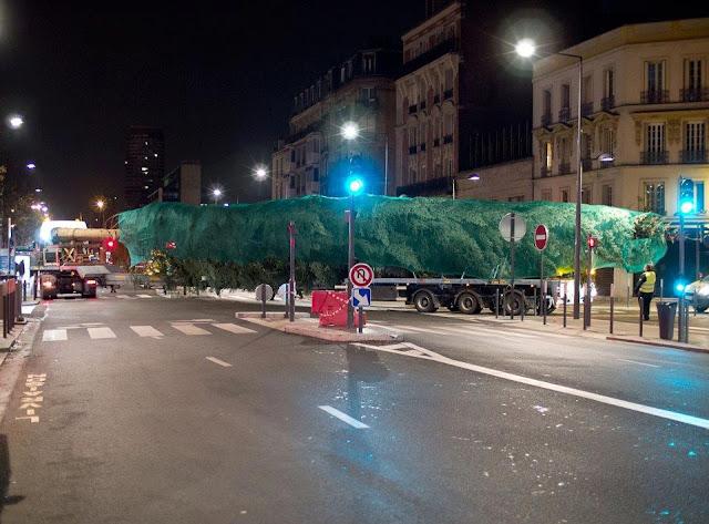 Le plus haut sapin de Noel vosgien pour la Place de la Concorde