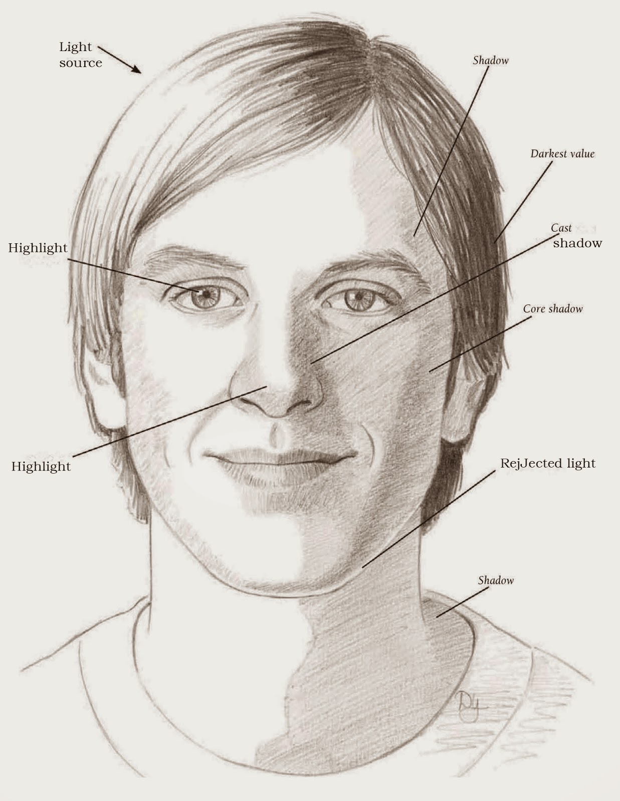 drawings learning the planes of the face
