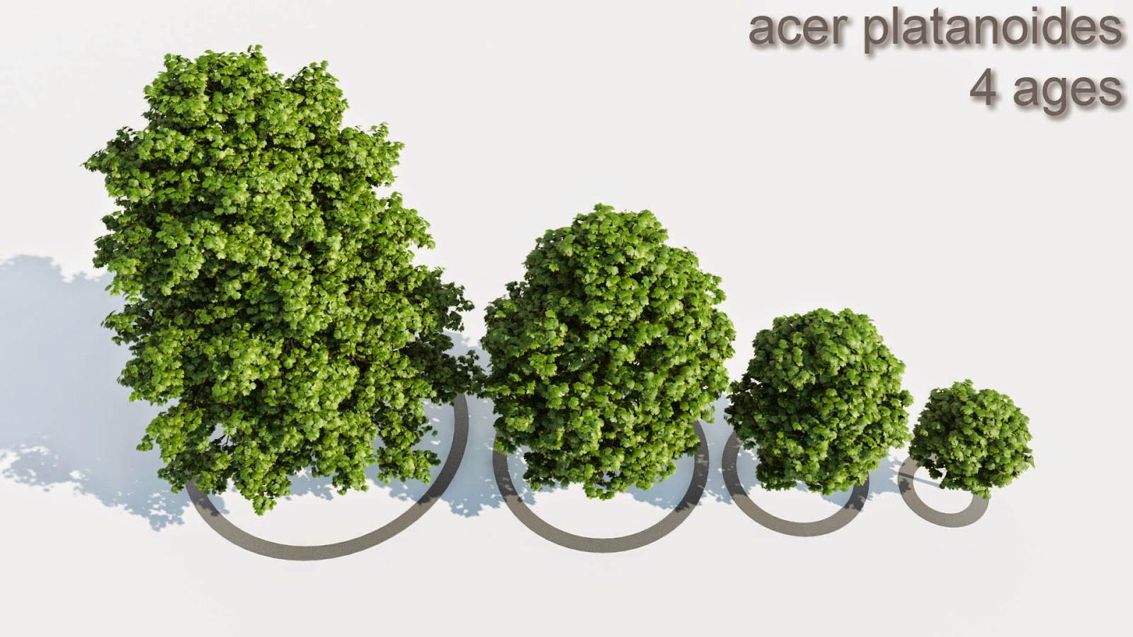 Download 3d Models Of ACER Tree CG Daily News