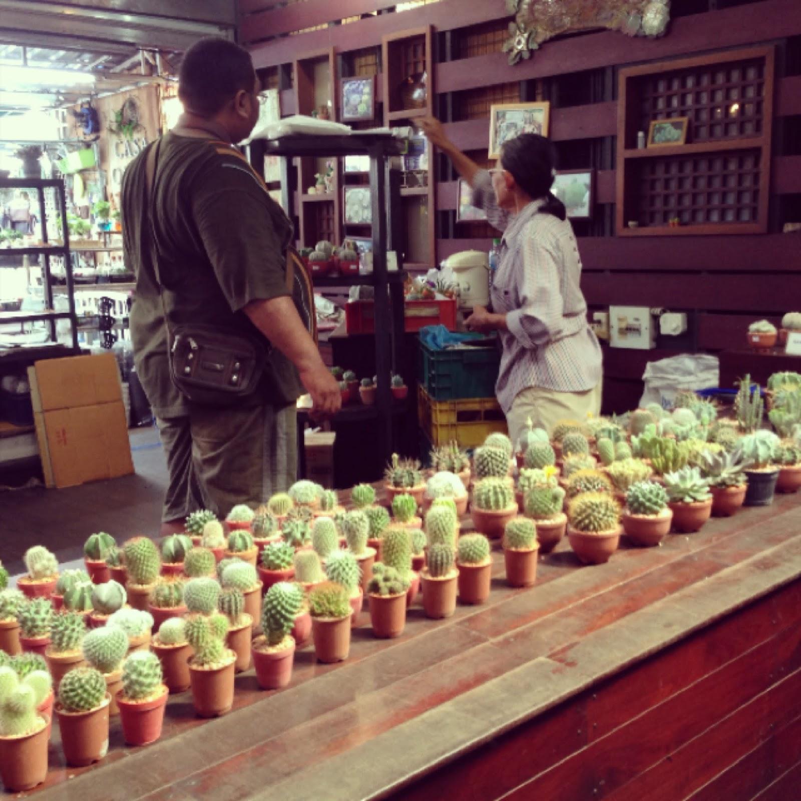 cactus shop chatuchak