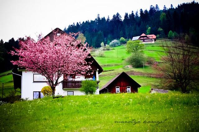 bahar fotoğrafı
