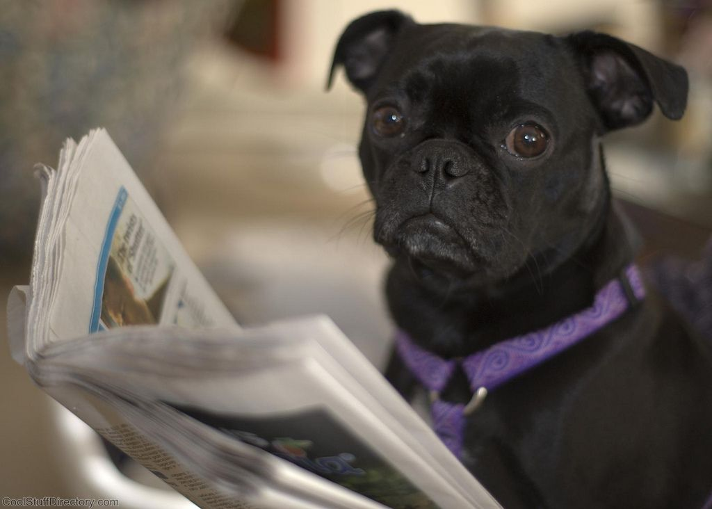 4. Dog Reads Newspaper by steve eng