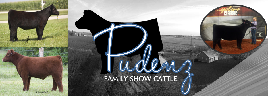 Pudenz Family Show Cattle Banner