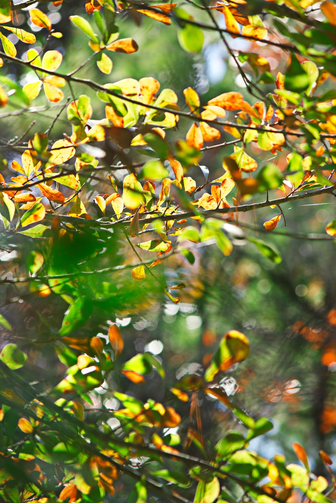 bokeh leaves - photo copyright Allison Beth Cooling