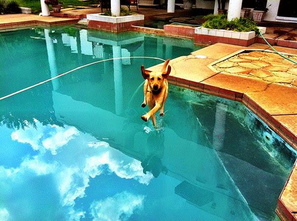 anjing berjalan atas air wow!