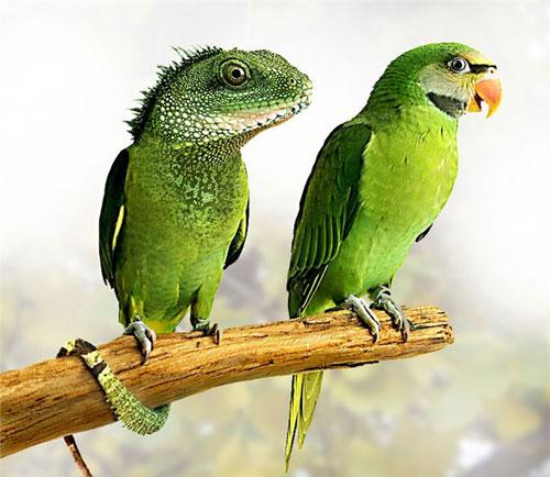Amazing Animals Transformation Graphics Design Photos