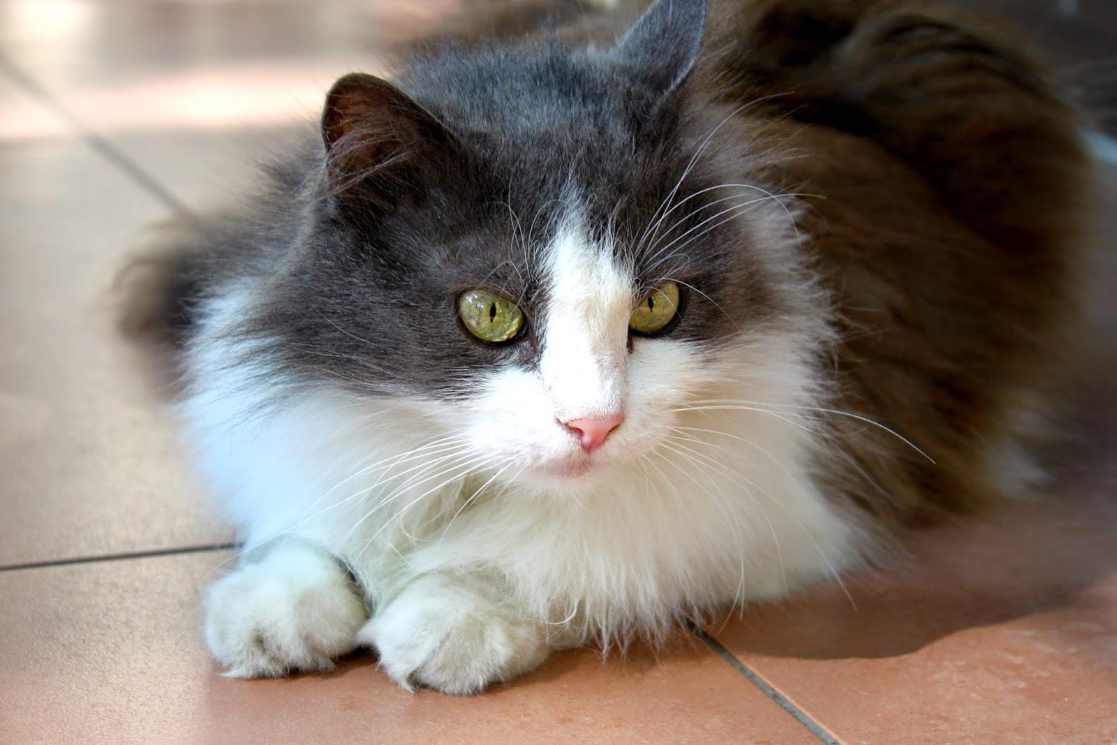 Кот по имени Шаня
