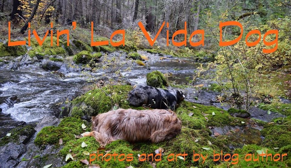 Livin' La Vida Dog