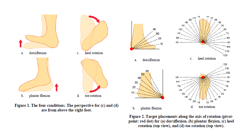Plantar flexion definition anatomy