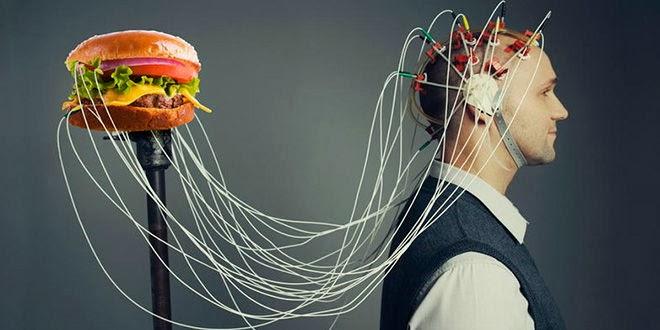 Comida Basura Daña Nuestro Cerebro
