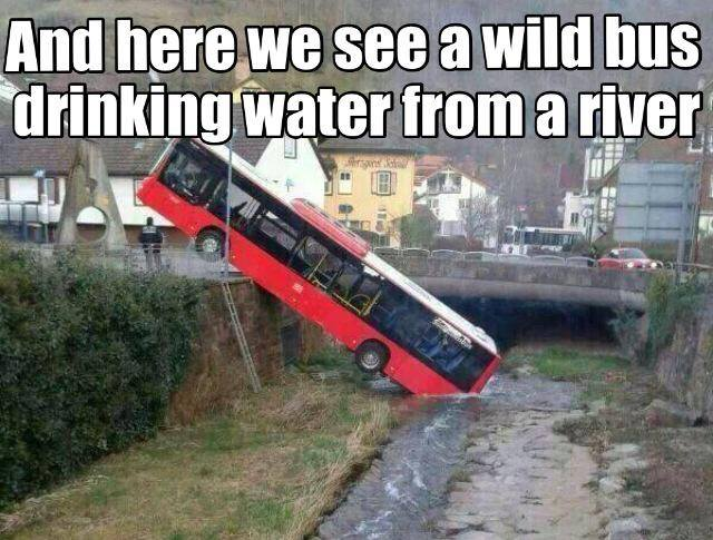 The Picture Jokes thread And-here-we-see-a-wild-bus-drinking-water-from-a-river