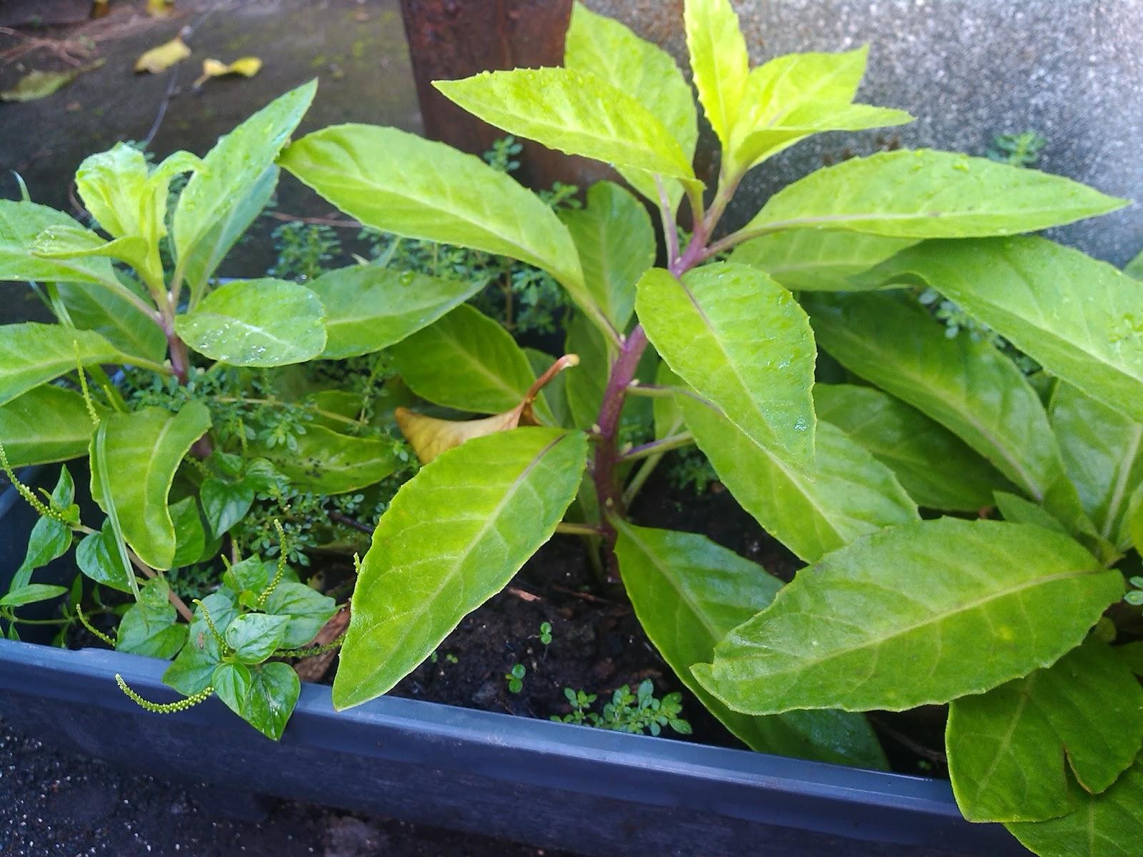 For Environment: Anti Diabetic Plant
