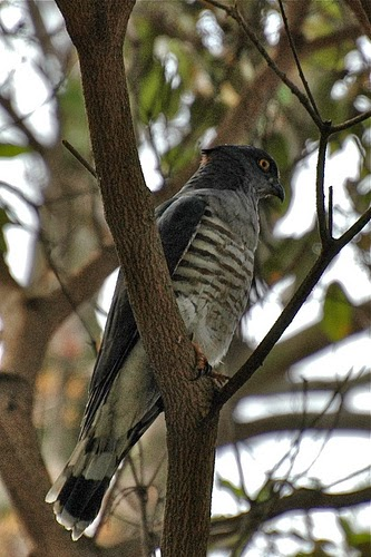 In The Avian World Cuckoos Are Villains You Root For These Diabolical Birds Can Trick Others Into Raising Young Instead Of Their Own