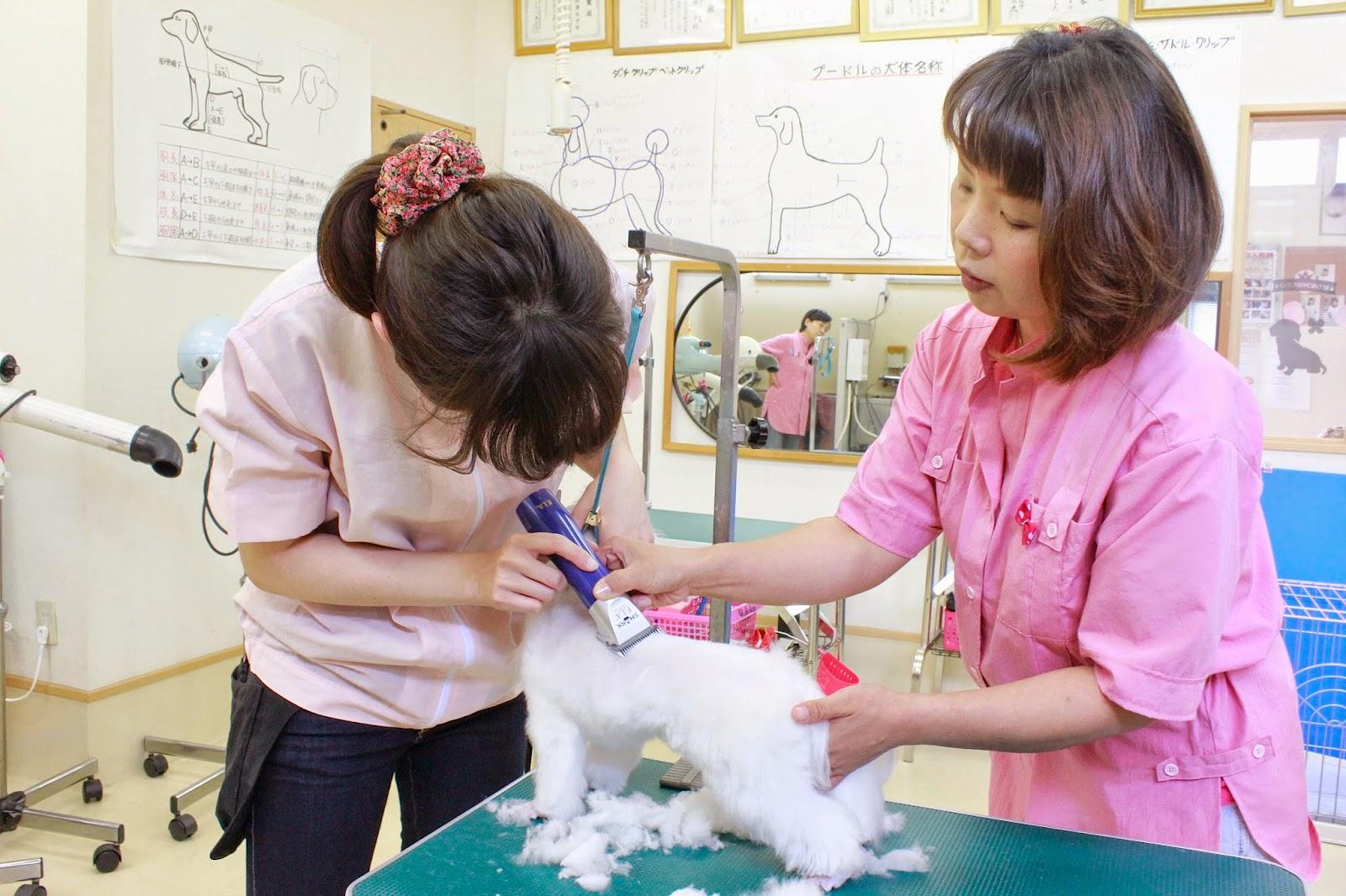 日本ペット美容マイスター学院 トリミング実習