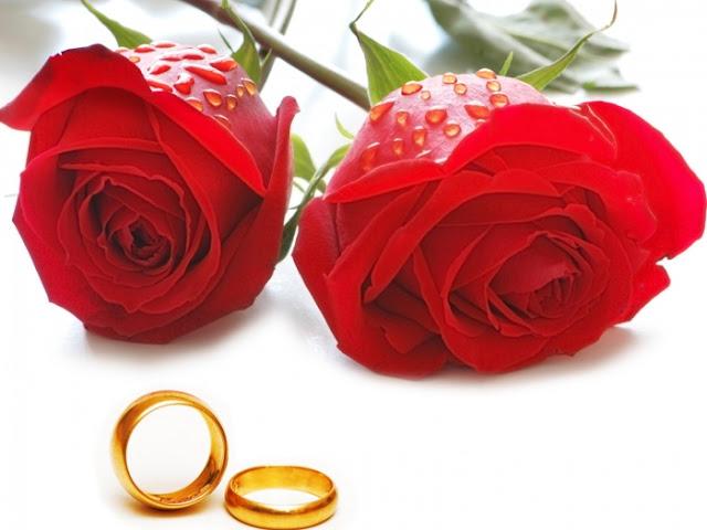 hình ảnh về tình yêu đẹp lãng mạn dễ thương, hoa hồng và đôi nhẫn cặp