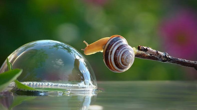 Fascinantes fotografías capturan el pequeño y el sorprendentemente mágico mundo de los caracoles