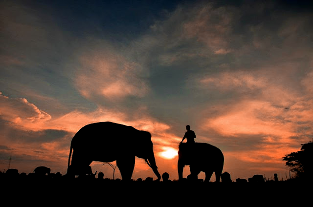 Taman Nasional Way Kambas Surga Para Gajah