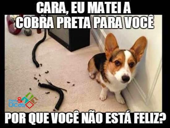 Cão comeu fio