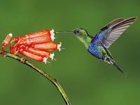 Hummingbird Photo and Picture 25